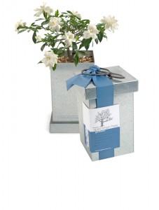 Kit bonsai